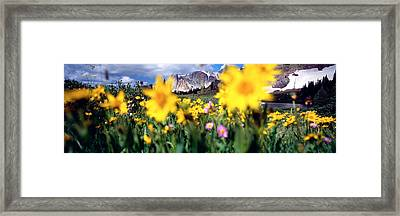 Daisies, Flowers, Field, Mountain Framed Print