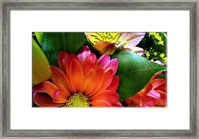 Daisies For Happiness Framed Print