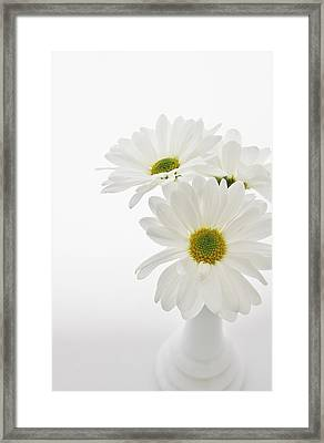 Daisies For You Framed Print