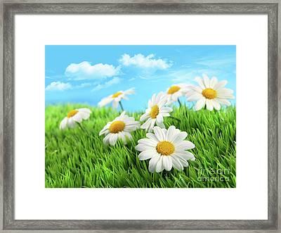 Daisies In Grass Against A Blue Sky Framed Print by Sandra Cunningham