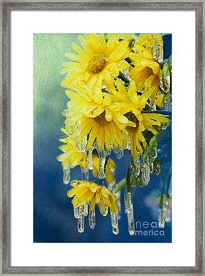 Daisies In Ice Framed Print by Betty LaRue