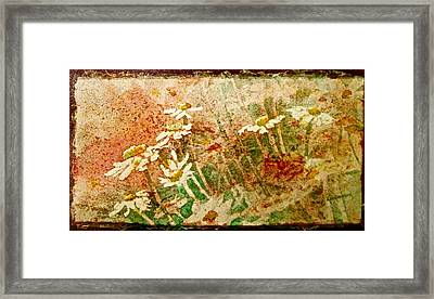 Daisies In The Wind Framed Print by Carolyn Rosenberger