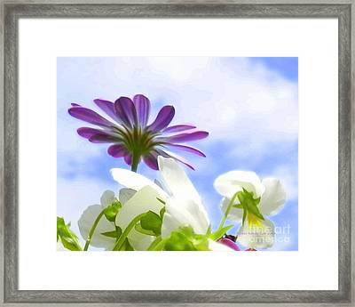 Daisies Looking Up Framed Print by Angelia Hodges Clay