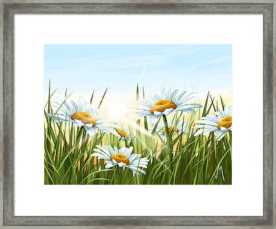 Daisies Framed Print by Veronica Minozzi