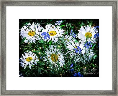 Daisies With Blue Flax And Bee Framed Print