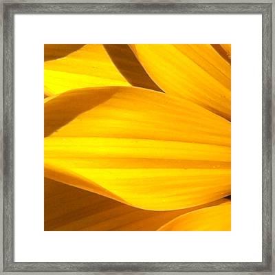 Daisy 1-2 Framed Print by Ann Pelaez