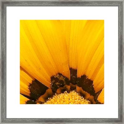 Daisy 1-4 Framed Print by Ann Pelaez