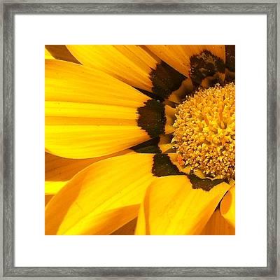 Daisy 1-5 Framed Print by Ann Pelaez