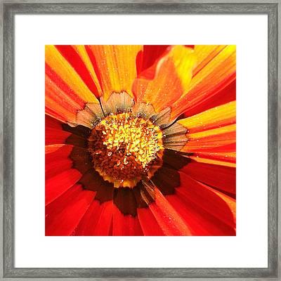 Daisy 2-1 Framed Print by Ann Pelaez