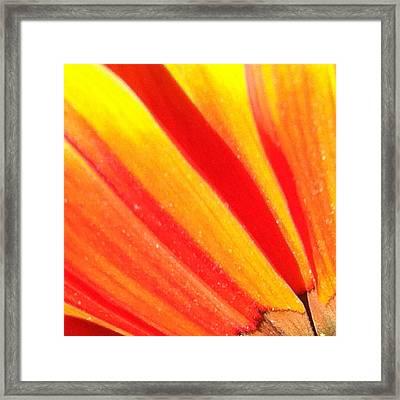Daisy 2-3 Framed Print by Ann Pelaez