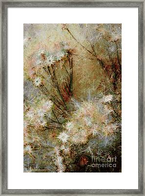 Framed Print featuring the photograph Daisy A Day 22 by Julie Lueders