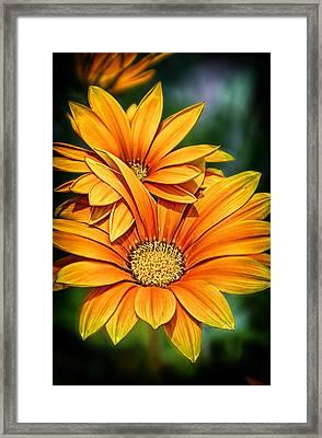 Daisy Blend Framed Print