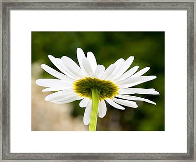 Daisy Framed Print by Bobbi Feasel