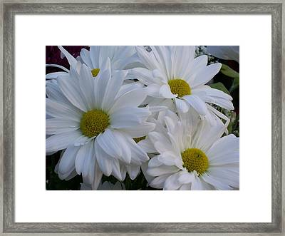 Framed Print featuring the photograph Daisy Bouquet by Belinda Lee