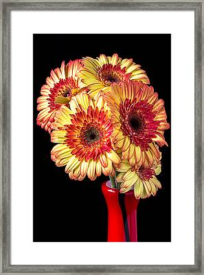 Daisy Bouquet Framed Print by Garry Gay