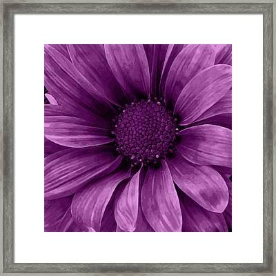 Daisy Daisy Grape Framed Print
