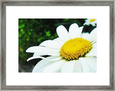 Framed Print featuring the photograph Daisy Daisy by Tiffany Erdman