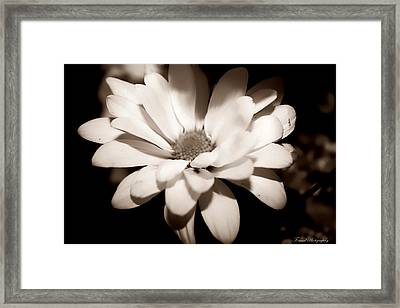Framed Print featuring the photograph Daisy by Debra Forand
