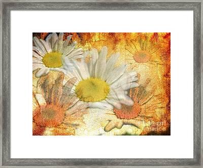 Daisy Delight Framed Print by Donald Davis