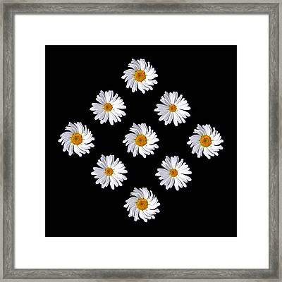 Daisy Diamond Framed Print by James Hammen
