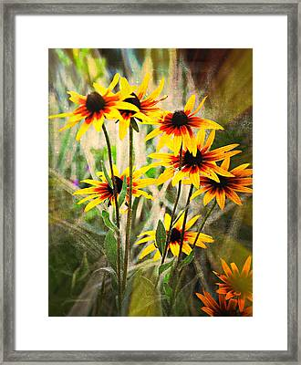 Daisy Do Framed Print by Marty Koch