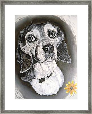 Daisy Dog Framed Print by Kevin F Heuman
