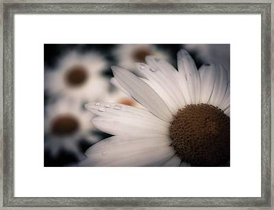 Daisy Don't Doubt Does He Love Me Does He Love Me Not Framed Print