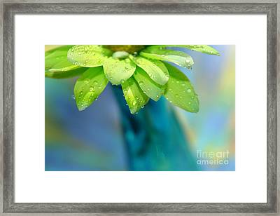 Daisy Dream Framed Print