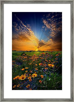 Daisy Dream Framed Print by Phil Koch