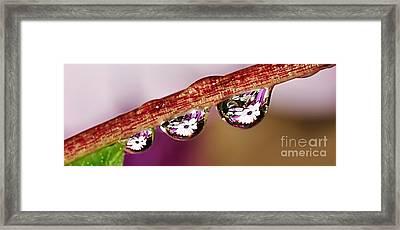 Daisy Droplets Framed Print by Kaye Menner