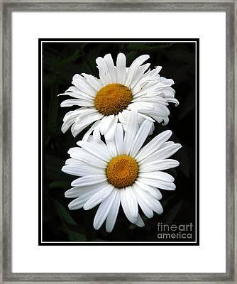 Daisy Duet Framed Print by Avis  Noelle