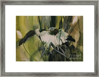 Daisy Framed Print by Elizabeth Carr