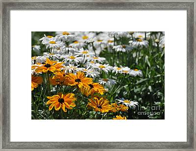 Daisy Fields Framed Print