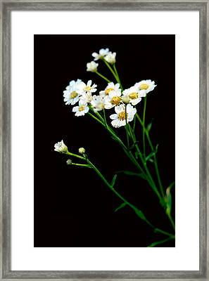 Daisy Flower Bouquet  Framed Print