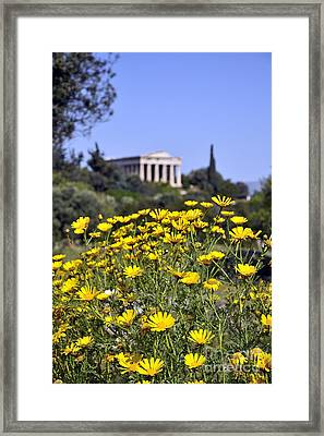 Framed Print featuring the photograph Daisy Flowers In Ancient Market by George Atsametakis