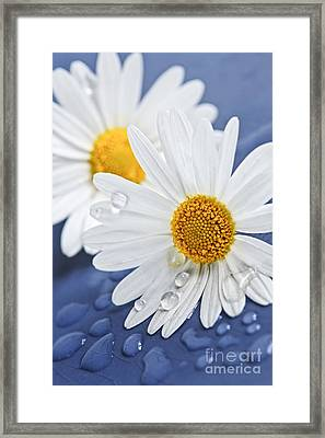 Daisy Flowers With Water Drops Framed Print