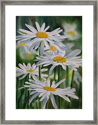 Daisy Garden Framed Print by Sharon Freeman
