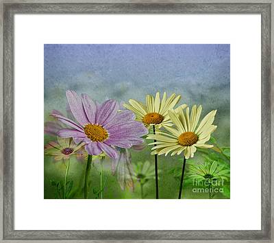 Framed Print featuring the digital art Daisy Garden by Shirley Mangini