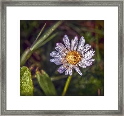 Daisy Framed Print by Hanny Heim