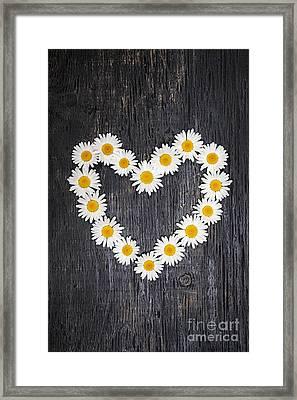 Daisy Heart On Dark Wood Framed Print by Elena Elisseeva