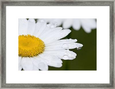 Daisy In A Drop Framed Print