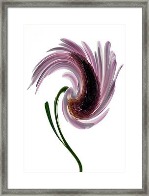 Daisy In A Twirl Framed Print by Terence Davis
