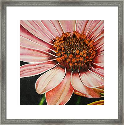 Daisy In Pink Framed Print