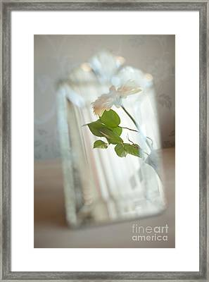 Framed Print featuring the photograph Daisy In The Mirror by Aiolos Greek Collections