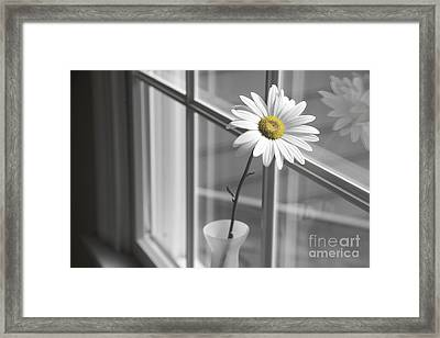 Daisy In The Window Framed Print by Diane Diederich