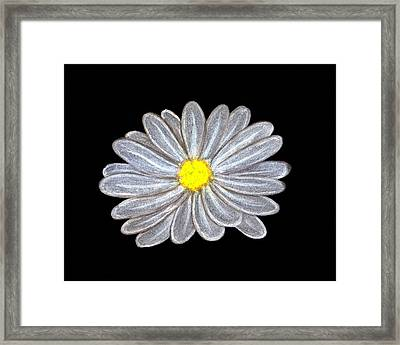 Daisy Framed Print