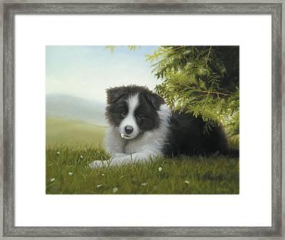 Daisy Framed Print by John Silver