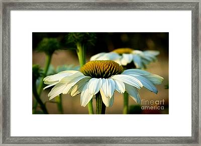 Daisy Mae Framed Print