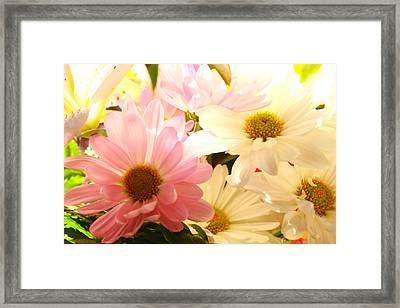 Daisy Magic Framed Print