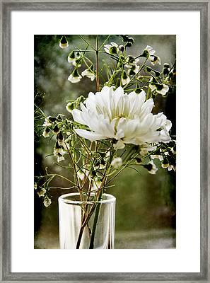 Daisy Mum  3 Framed Print